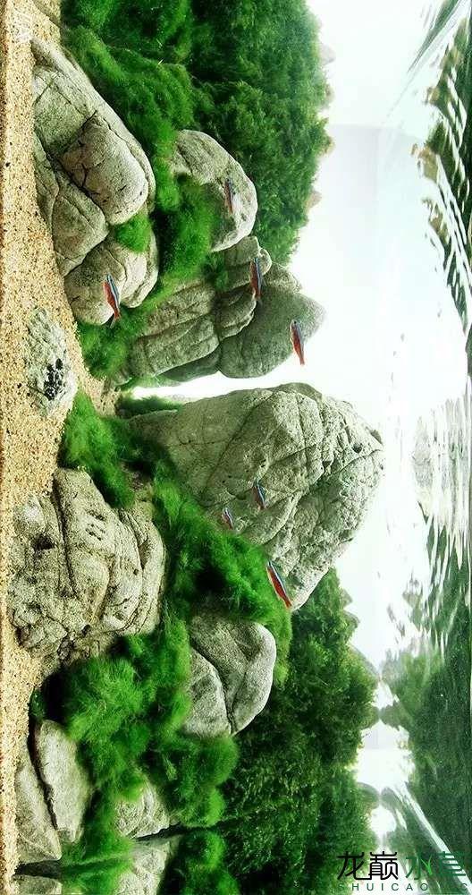 【西安虎鱼】西安白子关刀鱼哪个店的最好柳落云烟:抽象+创新= ? 西安观赏鱼信息 西安博特第22张