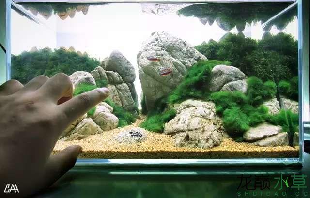【西安虎鱼】西安白子关刀鱼哪个店的最好柳落云烟:抽象+创新= ? 西安观赏鱼信息 西安博特第23张