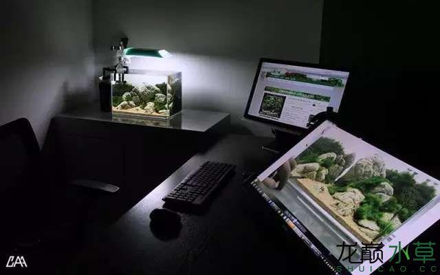 【西安虎鱼】西安白子关刀鱼哪个店的最好柳落云烟:抽象+创新= ? 西安观赏鱼信息 西安博特第25张