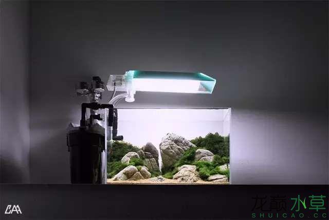【西安虎鱼】西安白子关刀鱼哪个店的最好柳落云烟:抽象+创新= ? 西安观赏鱼信息 西安博特第24张