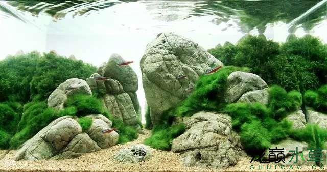 【西安虎鱼】西安白子关刀鱼哪个店的最好柳落云烟:抽象+创新= ? 西安观赏鱼信息 西安博特第26张
