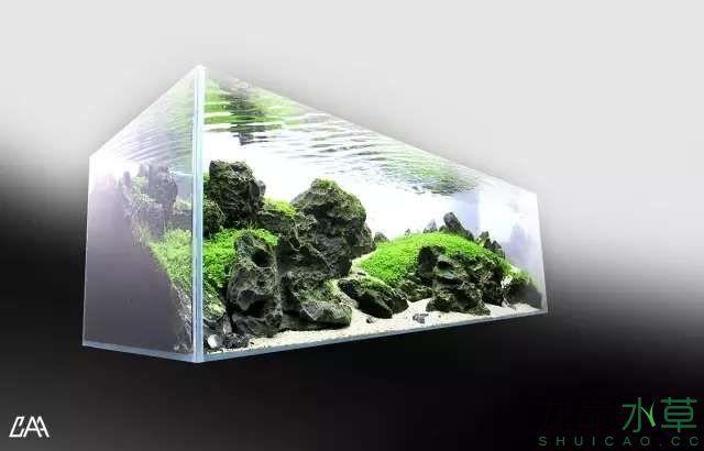 【西安虎鱼】西安白子关刀鱼哪个店的最好柳落云烟:抽象+创新= ? 西安观赏鱼信息 西安博特第30张