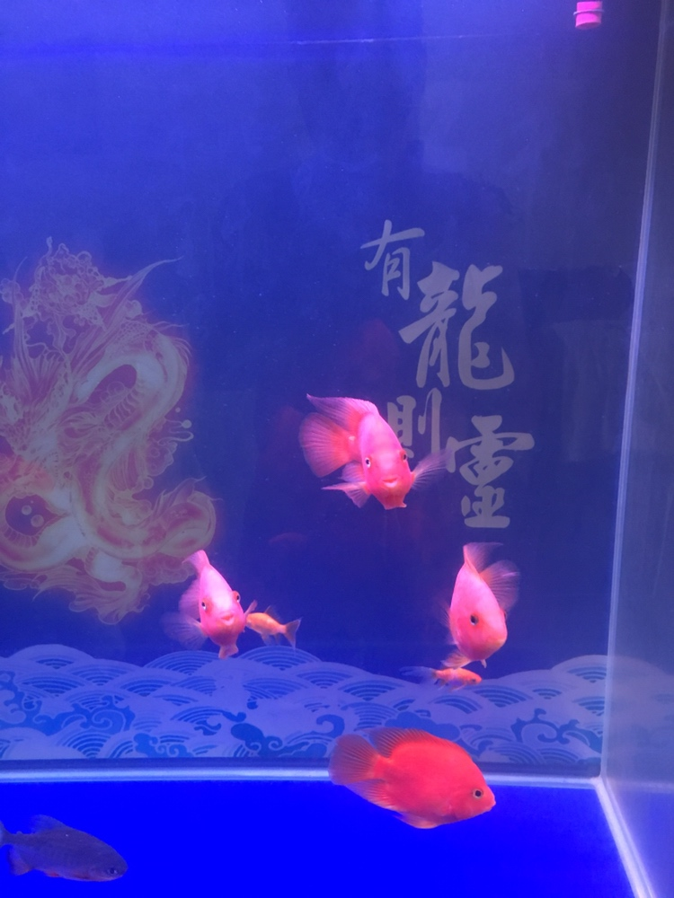 向大佬们请教 西安观赏鱼信息 西安博特第2张