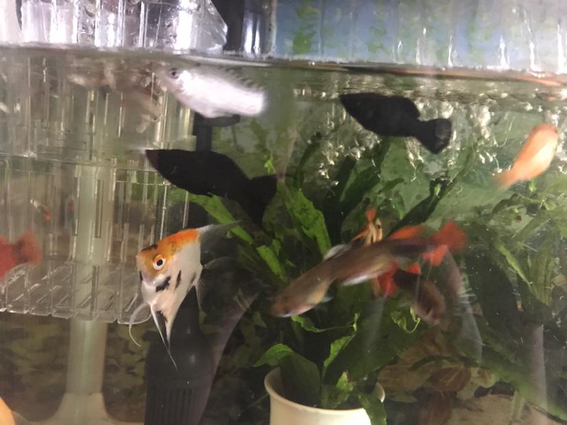 西安虎鱼有几种又生了 西安龙鱼论坛 西安博特第2张