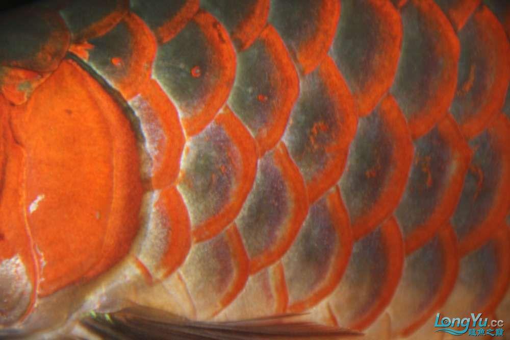 月溅星河长路漫漫烽烟残尽独影阑珊西安水族 西安观赏鱼信息 西安博特第7张