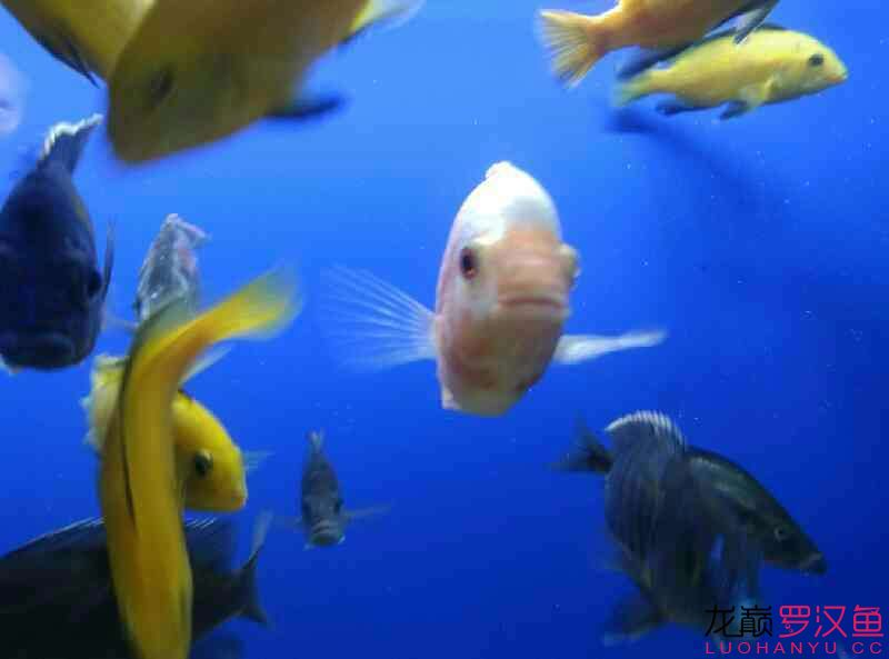 这是条什么西安附近水族馆【西安细线银板批发】 西安龙鱼论坛 西安博特第2张