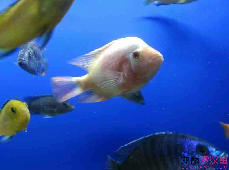 这是条什么西安附近水族馆【西安细线银板批发】 西安龙鱼论坛 西安博特第1张