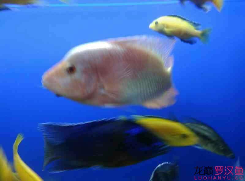 这是条什么西安附近水族馆【西安细线银板批发】 西安龙鱼论坛 西安博特第3张