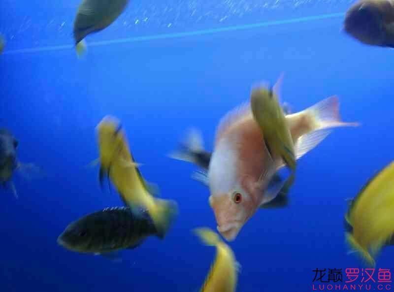 这是条什么西安附近水族馆【西安细线银板批发】 西安龙鱼论坛 西安博特第4张