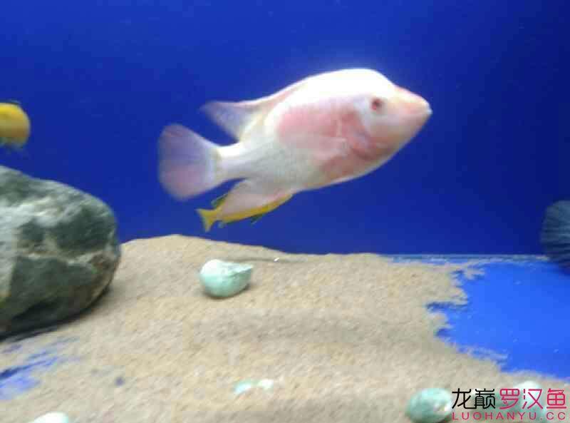 这是条什么西安附近水族馆【西安细线银板批发】 西安龙鱼论坛 西安博特第5张