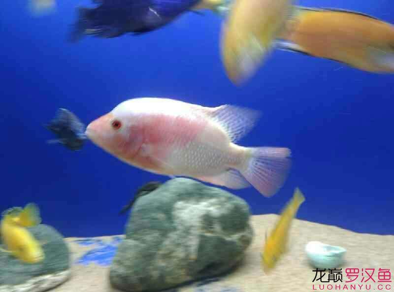 这是条什么西安附近水族馆【西安细线银板批发】 西安龙鱼论坛 西安博特第6张