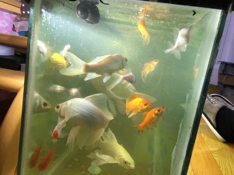 大神看看我的水到底该怎么办 西安观赏鱼信息 西安博特第2张