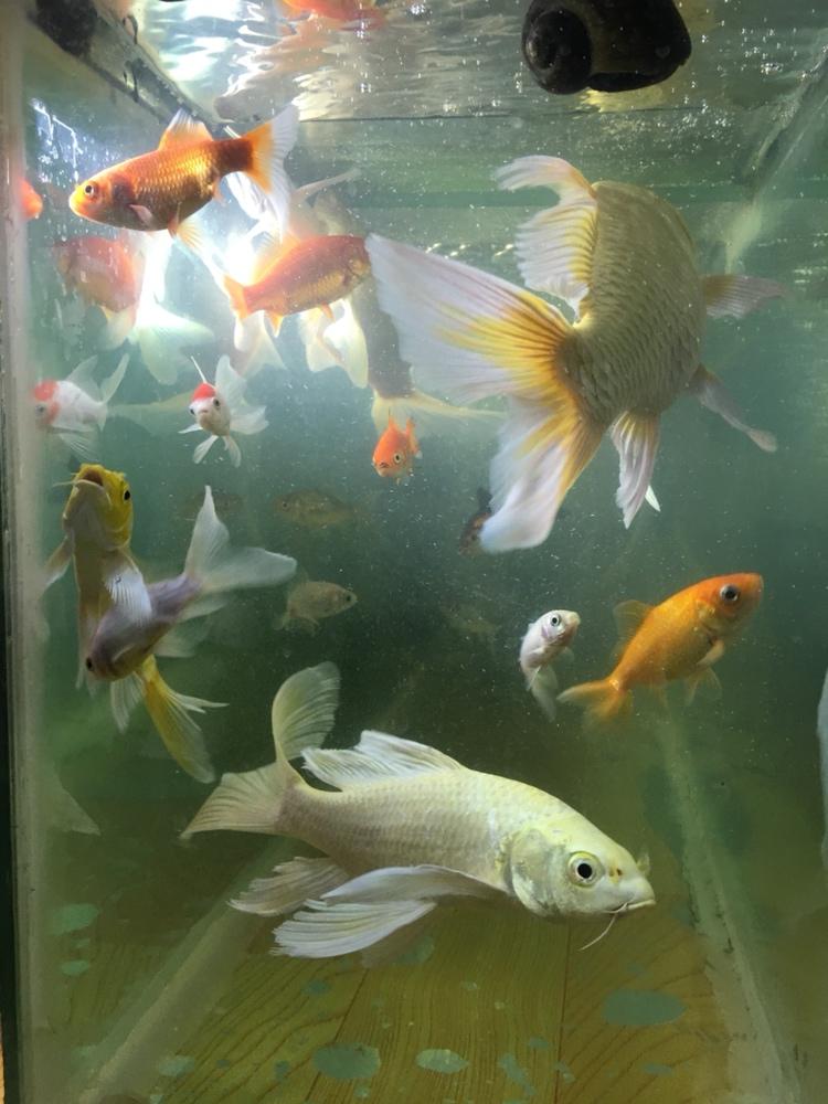 大神看看我的水到底该怎么办 西安观赏鱼信息 西安博特第3张