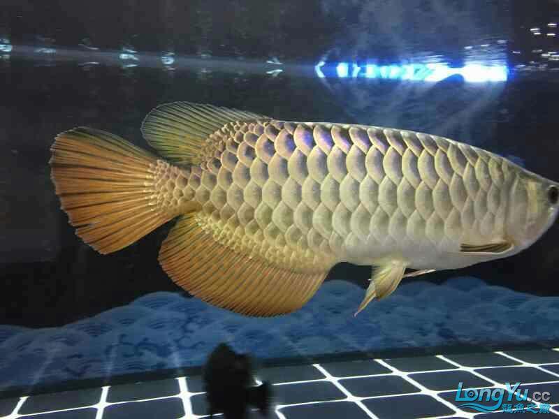 小四8个月记录 西安观赏鱼信息 西安博特第5张