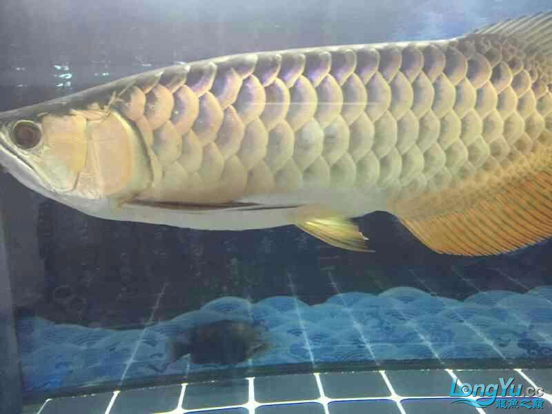 小四8个月记录 西安观赏鱼信息 西安博特第6张