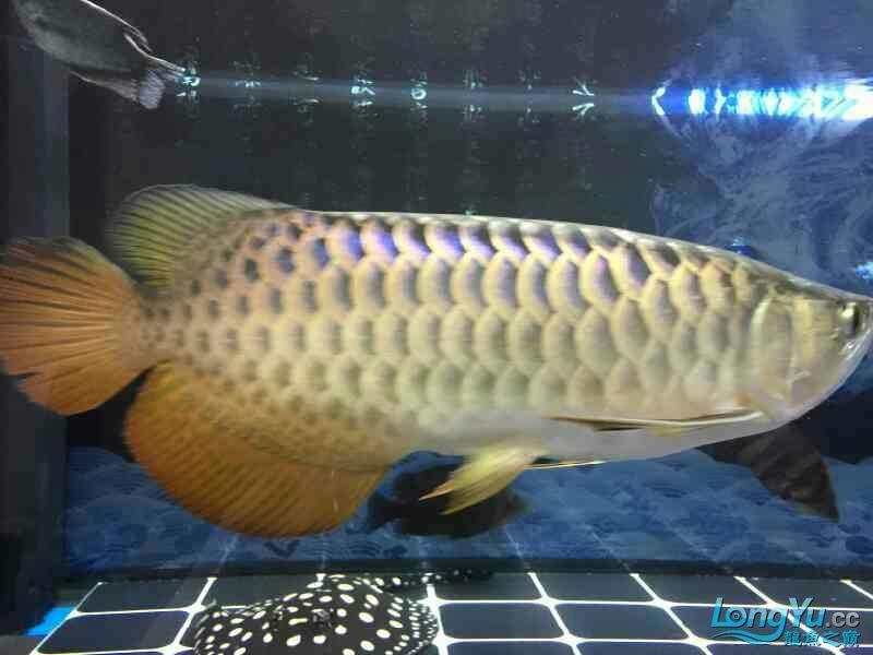 小四8个月记录 西安观赏鱼信息 西安博特第7张