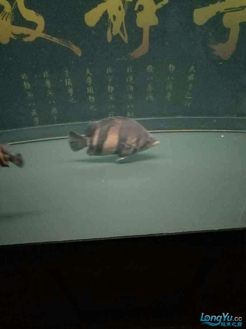 西安鱼缸定做养鱼78年经历了很多养鱼给我带来的欢乐只有养鱼人才懂得 西安龙鱼论坛 西安博特第6张
