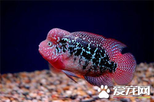 西安鱼缸定做养鱼78年经历了很多养鱼给我带来的欢乐只有养鱼人才懂得 西安龙鱼论坛 西安博特第7张