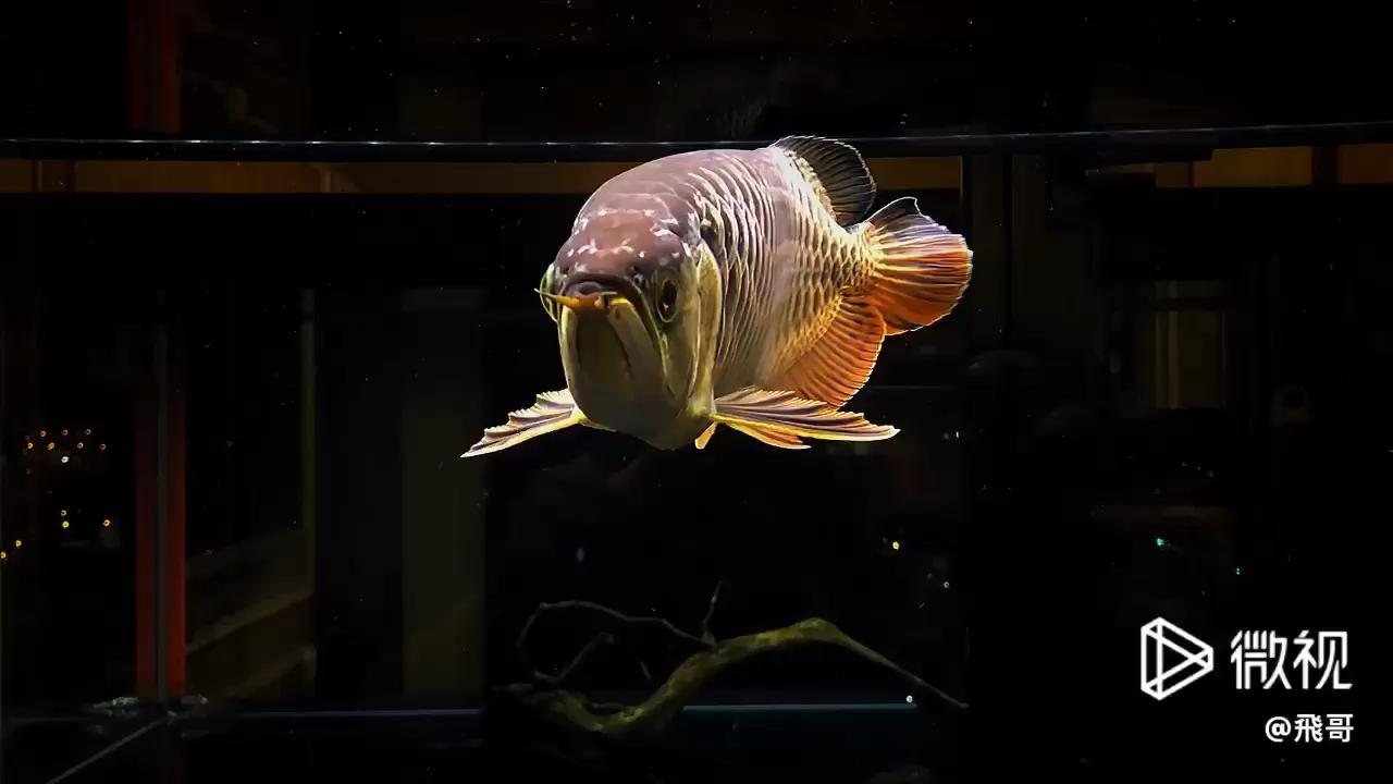 养鱼重在养水养树重在养根养人重在养心 西安观赏鱼信息 西安博特第1张