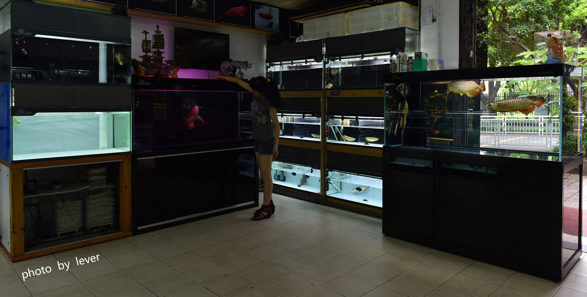 嗨我虽是杂文泰虎但也很多人喜欢我哟 西安观赏鱼信息 西安博特第12张