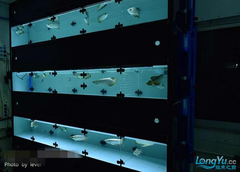 嗨我虽是杂文泰虎但也很多人喜欢我哟 西安观赏鱼信息 西安博特第13张