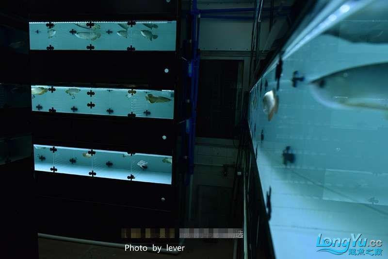 嗨我虽是杂文泰虎但也很多人喜欢我哟 西安观赏鱼信息 西安博特第15张