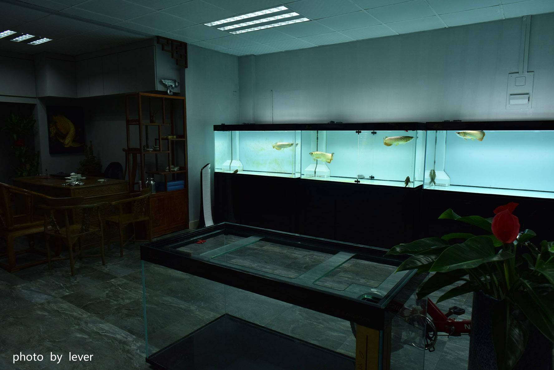 嗨我虽是杂文泰虎但也很多人喜欢我哟 西安观赏鱼信息 西安博特第18张