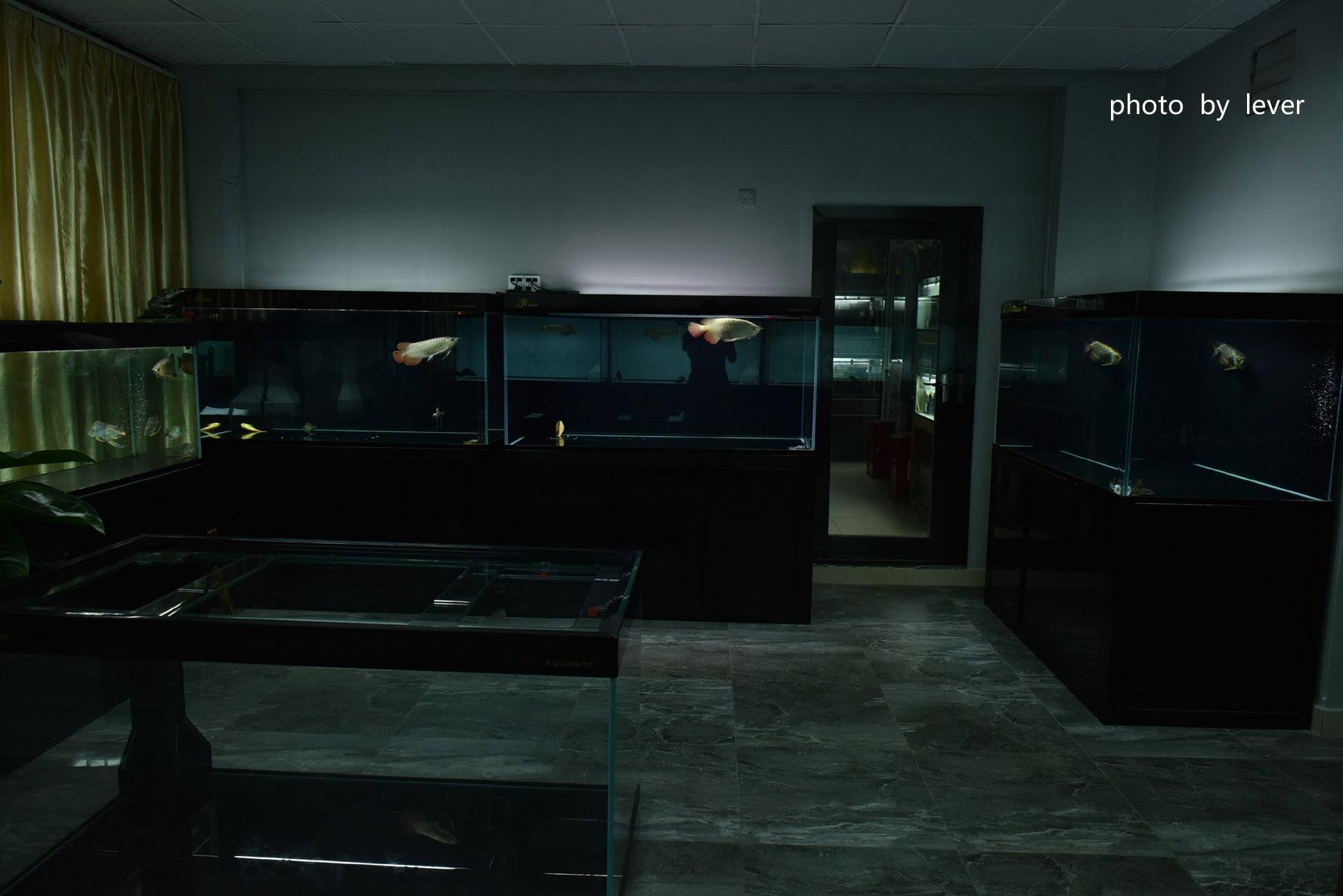 嗨我虽是杂文泰虎但也很多人喜欢我哟 西安观赏鱼信息 西安博特第19张