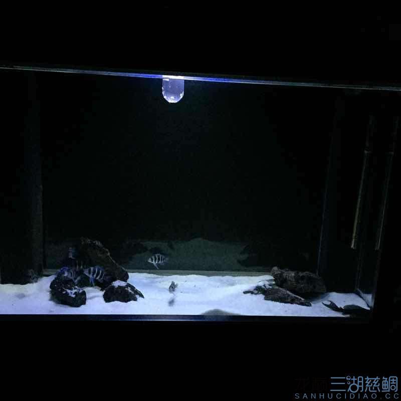 发几张深夜里的小步【西安哪个水族店有白子关刀鱼】 西安龙鱼论坛 西安博特第1张