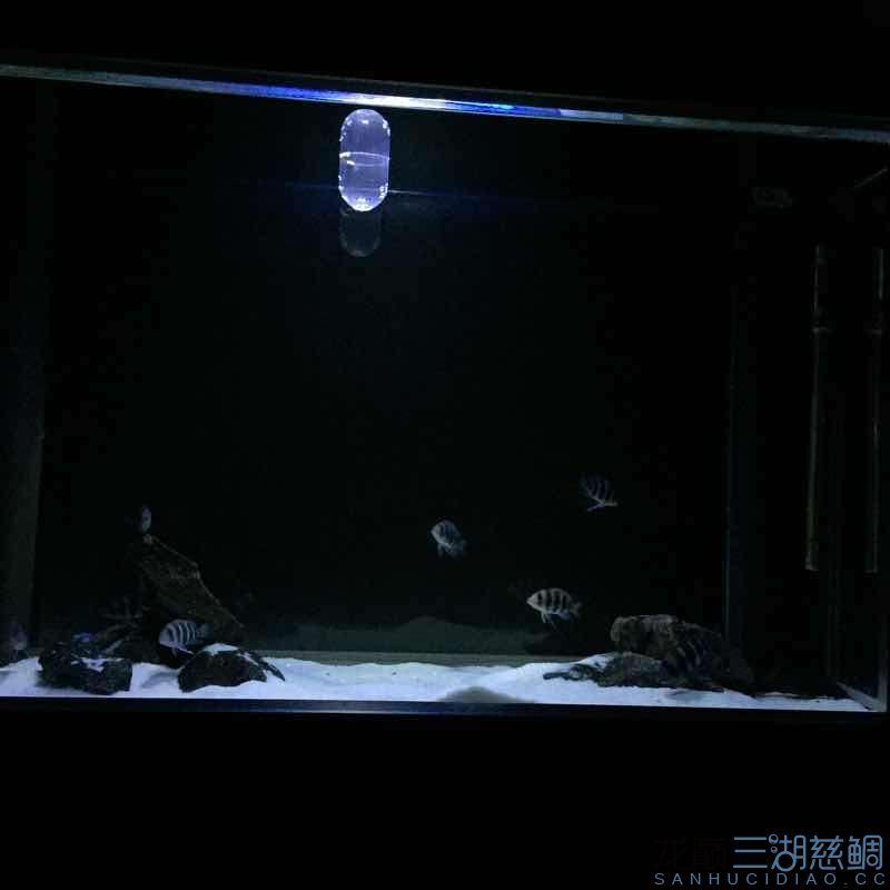 发几张深夜里的小步【西安哪个水族店有白子关刀鱼】 西安龙鱼论坛 西安博特第3张