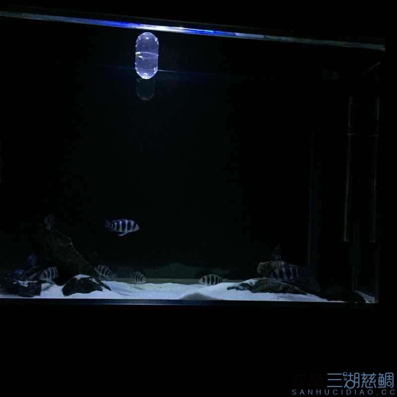 发几张深夜里的小步【西安哪个水族店有白子关刀鱼】 西安龙鱼论坛 西安博特第5张