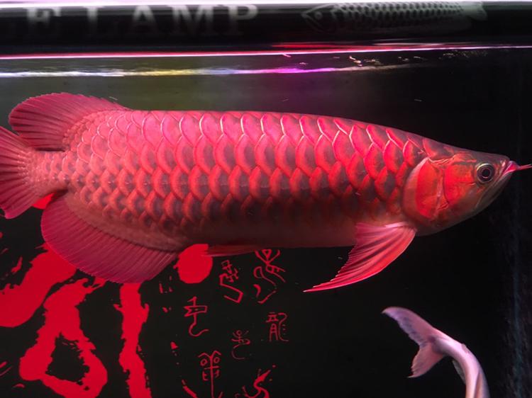 西安最大水族批发市场喝茶赏鱼 西安观赏鱼信息