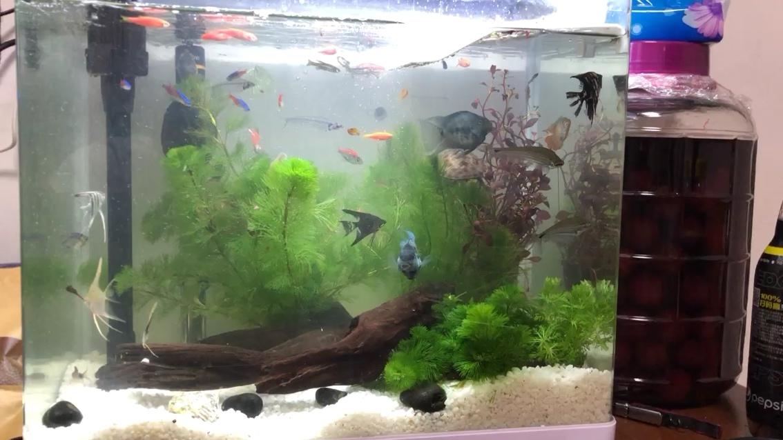 西安观赏鱼缸定制龟鱼同养 新手刚刚入坑 西安龙鱼论坛 西安博特第1张