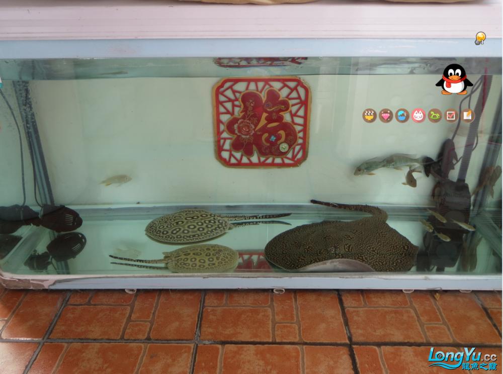 大龄儿童也过儿童节儿时西安哪个水族馆有金龙的游戏 西安龙鱼论坛 西安博特第3张