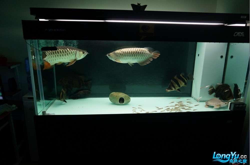 大龄儿童也过儿童节儿时西安哪个水族馆有金龙的游戏 西安龙鱼论坛 西安博特第4张