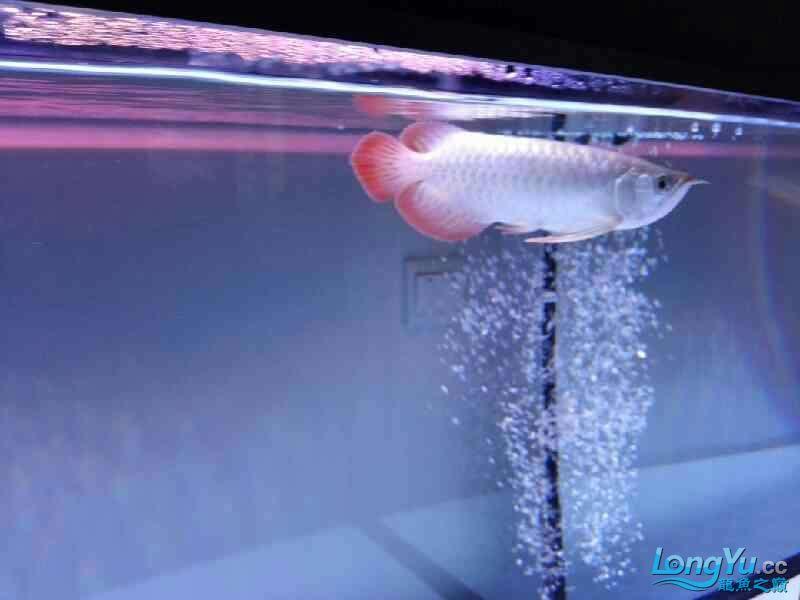 【西安银龙看看我家小鱼 西安观赏鱼信息 西安博特第1张