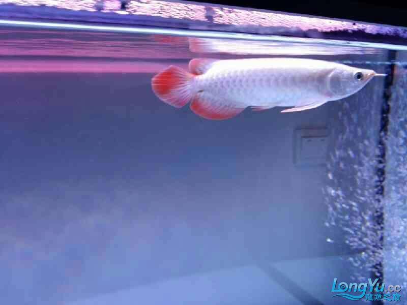 【西安银龙看看我家小鱼 西安观赏鱼信息 西安博特第4张