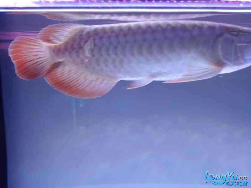 【西安银龙看看我家小鱼 西安观赏鱼信息 西安博特第6张