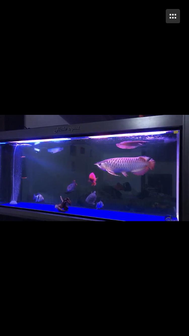 发个我的鱼缸 西安龙鱼论坛 西安博特第3张