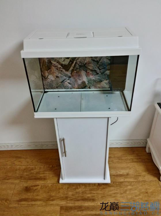 黑钻鱼西安淡水观赏鱼缸使用效果 西安龙鱼论坛 西安博特第2张