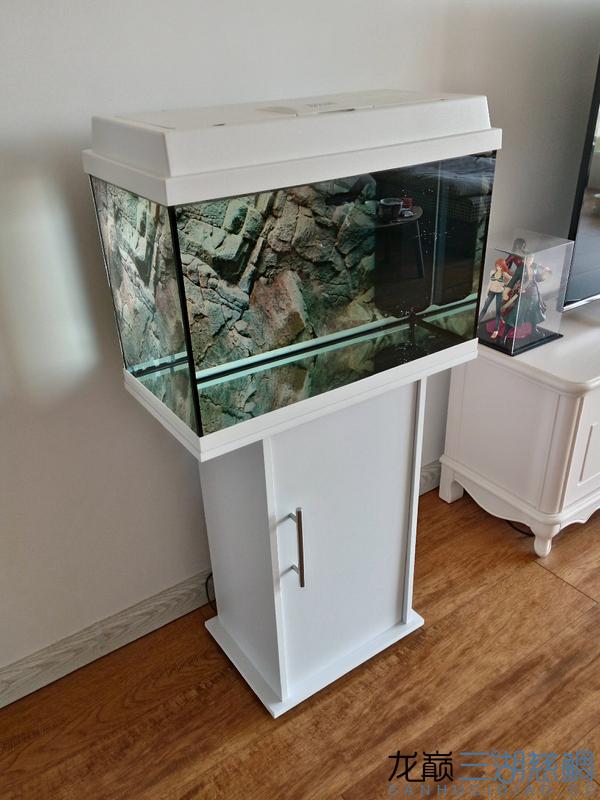 黑钻鱼西安淡水观赏鱼缸使用效果 西安龙鱼论坛 西安博特第1张