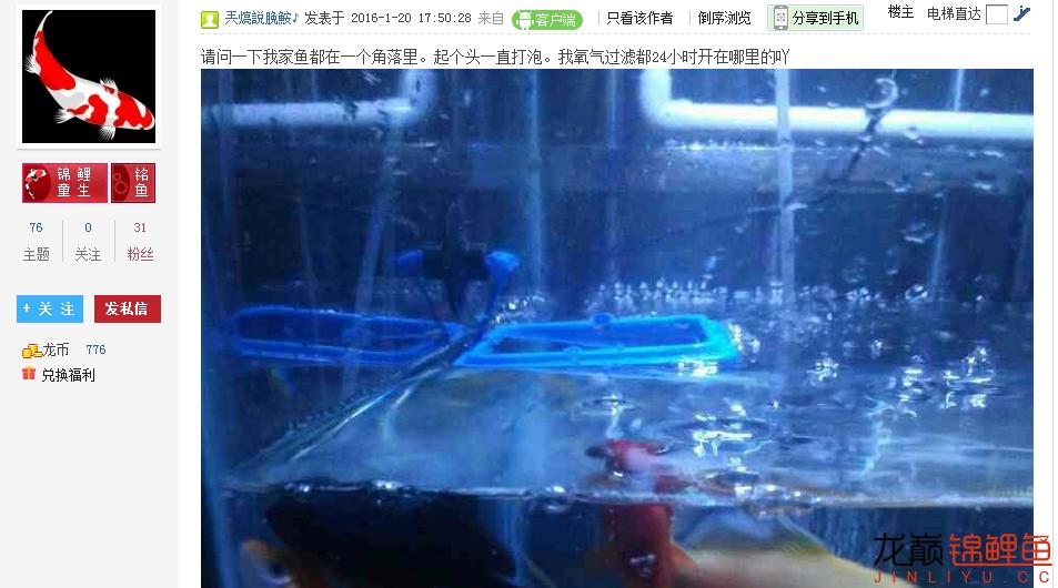 西【西安虎鱼】安白化大白鲨哪个店的最好海燕呐你可长点心吧申精 西安龙鱼论坛 西安博特第5张