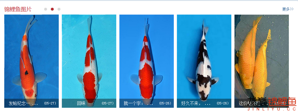 西【西安虎鱼】安白化大白鲨哪个店的最好海燕呐你可长点心吧申精 西安龙鱼论坛 西安博特第12张