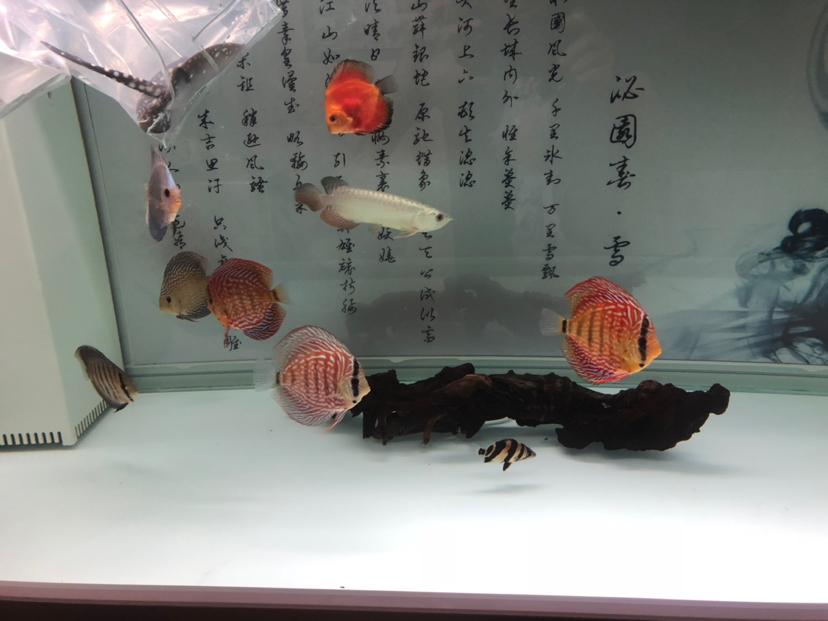 都是小鱼不是啥极品但是很喜欢 西安观赏鱼信息 西安博特第1张