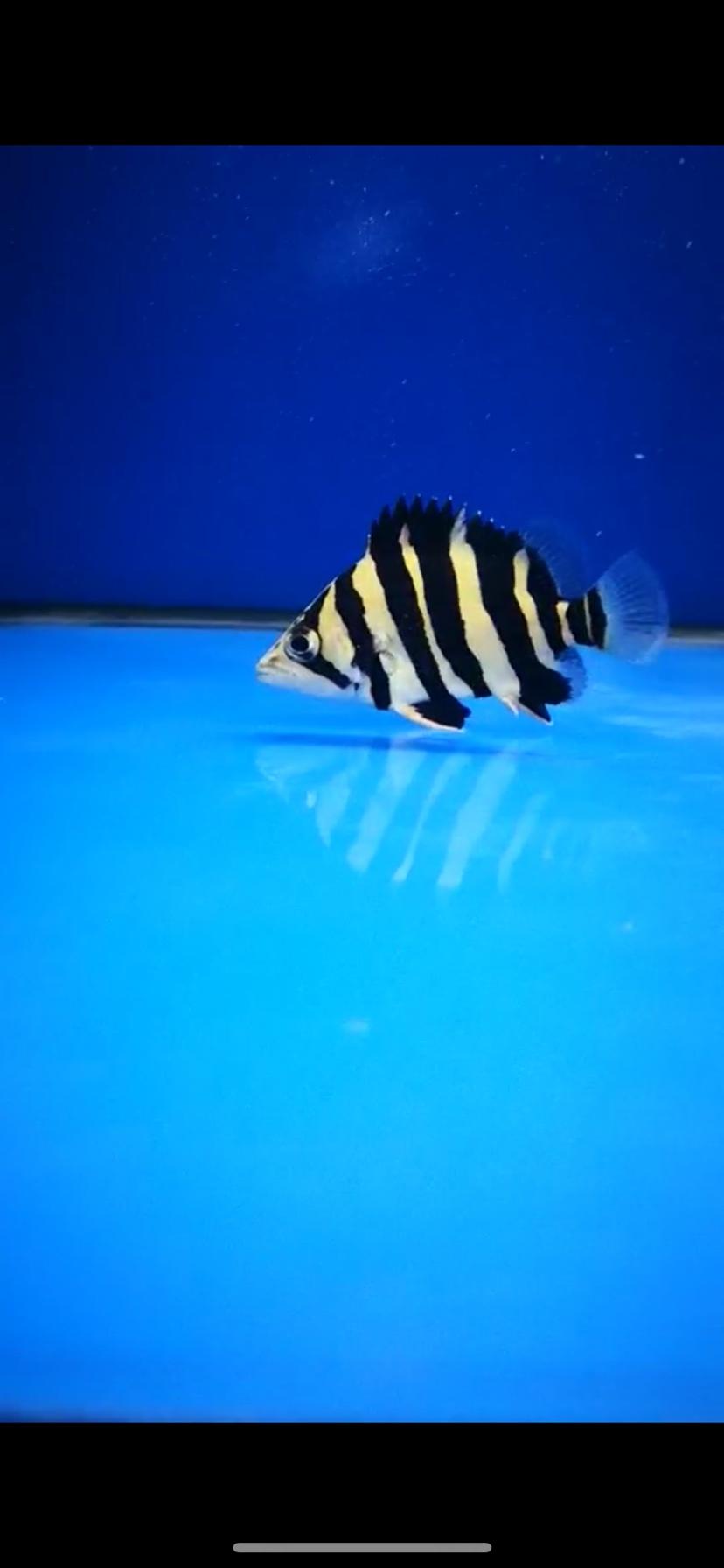都是小鱼不是啥极品但是很喜欢 西安观赏鱼信息 西安博特第3张