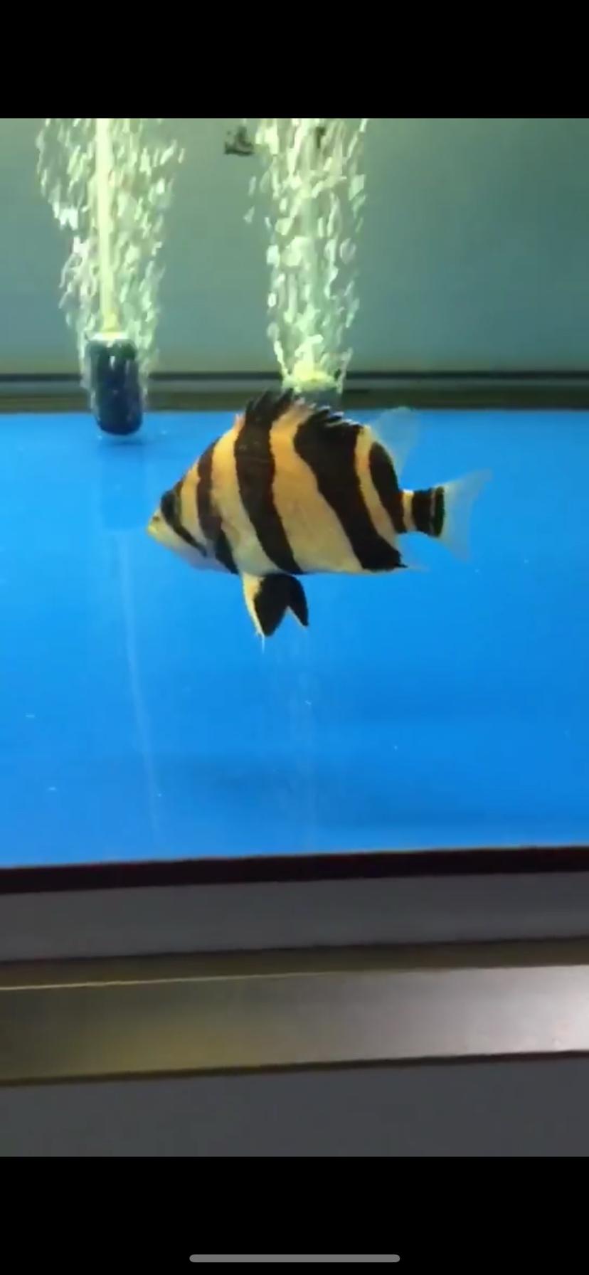 都是小鱼不是啥极品但是很喜欢 西安观赏鱼信息 西安博特第2张