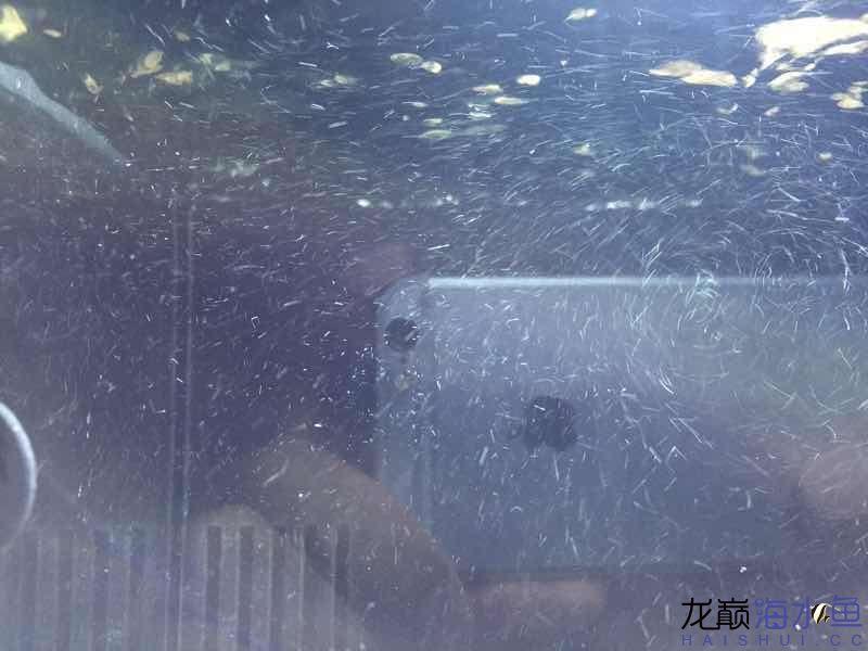气泡问题 新手求助 西安观赏鱼信息 西安博特第1张