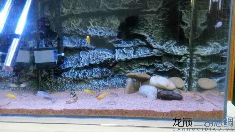 请各位大神看看还有什么需要改进的多谢 西安观赏鱼信息 西安博特第2张