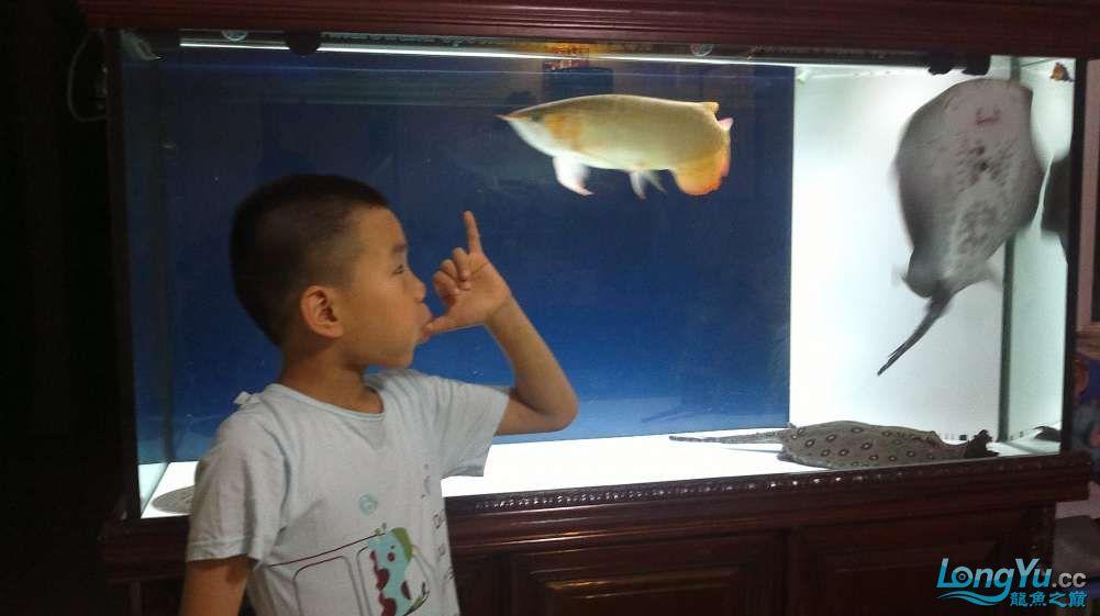 西安花鸟市场被查龙巅6周年+宝贝们的独家pose来庆贺 西安观赏鱼信息 西安博特第2张