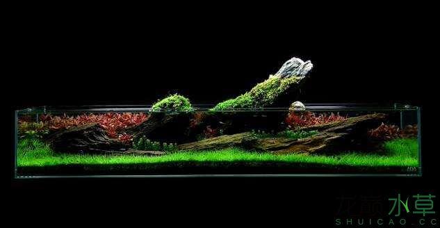 分享【西安女王大帆】James Findley大师的一个矮缸作品 西安龙鱼论坛 西安博特第5张